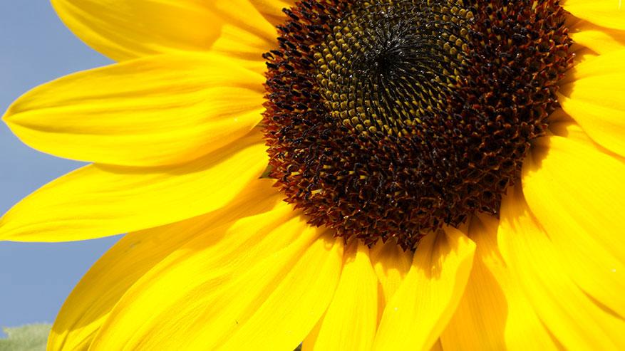 Solari Remedia: filtri naturali