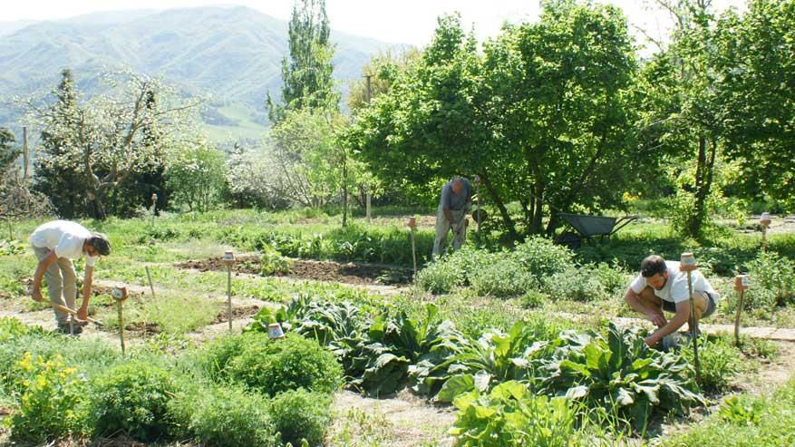 L'utilizzo dei campi bioenergetici in agricoltura