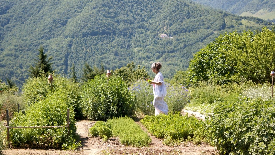 PASSEGGIATA DI RICONOSCIMENTO - Le erbe che curano con Lucilla