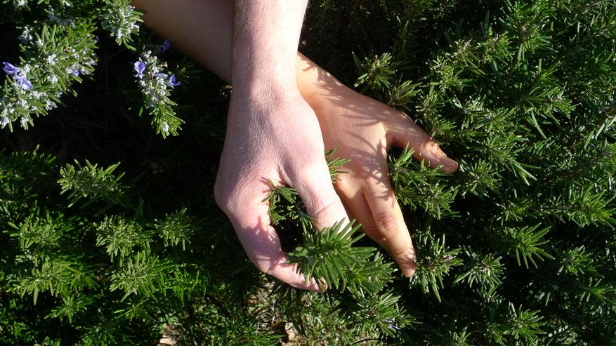 STAGIONANDO - Incontro con gli oli essenziali: aromaterapia e profumi naturali