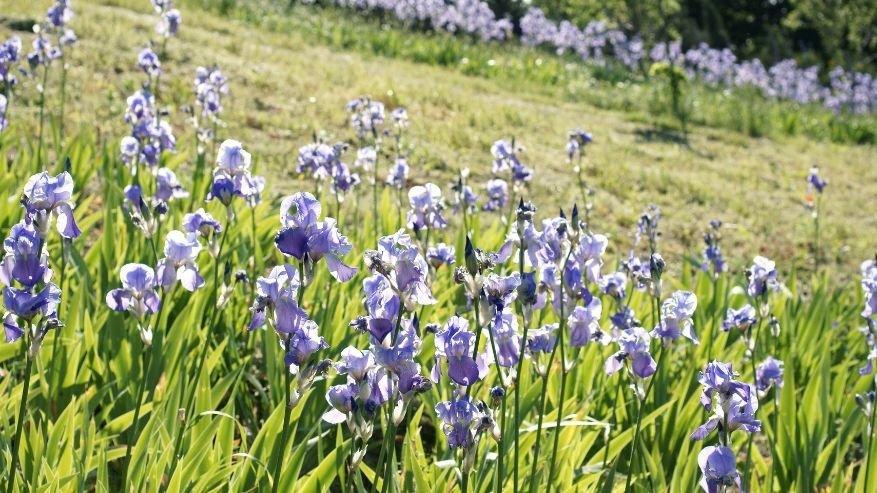 Le straordinarie proprietà delle piante