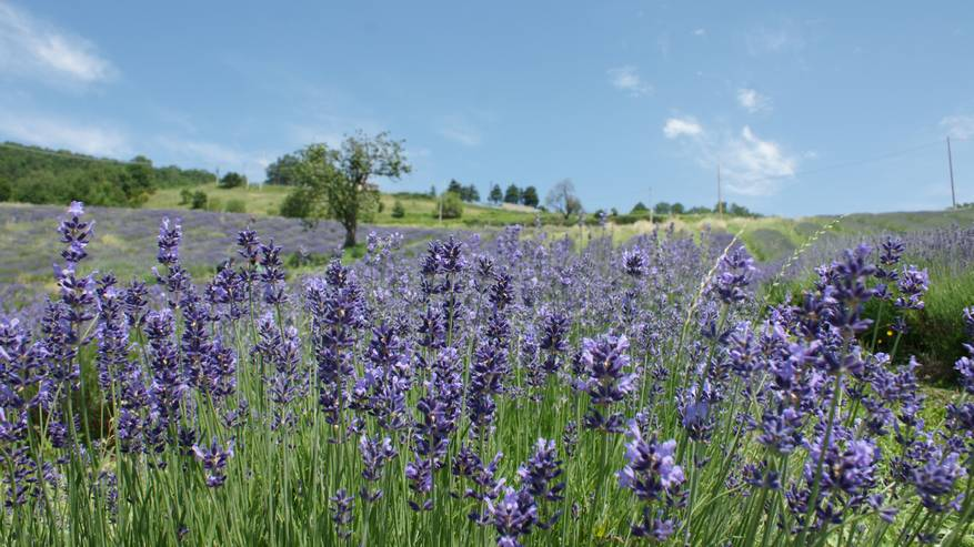 Lavanda e Resque Remedy