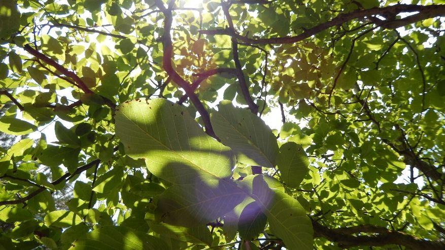 Spirito degli Alberi: il rimedio del nuovo secolo